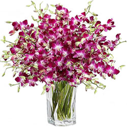 Tender Arrangement of Orchids in a Glass Vase
