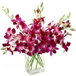 Gorgeous Orchids Presented in a Glass Vase
