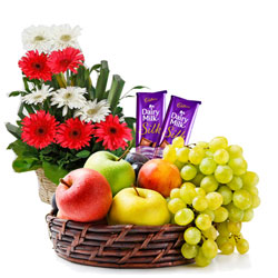 Delectable Dairy Milk Silk with Mixed Fruits Basket and Gerberas Arrangement
