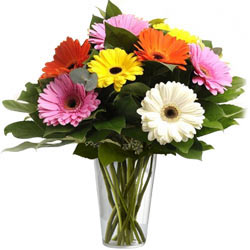 Appealing Mixed Gerberas in a Glass Vase