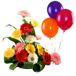 Special Mixed Gerberas Arrangement with Balloons
