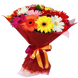 Elegant Collection of Mixed Gerberas