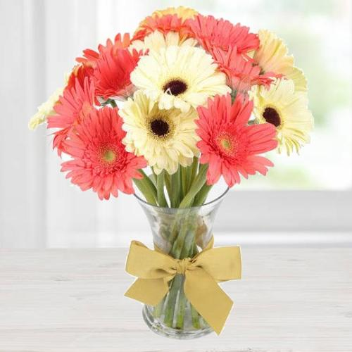 Blooming Pink N White Gerberas in a Vase