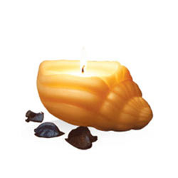 Remarkable IRIS Sea Shell Candle Set