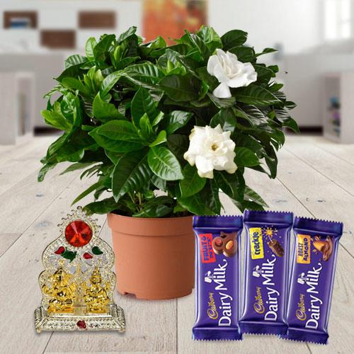 Blooming Jasmine Floral Planter with Holiday Greetings