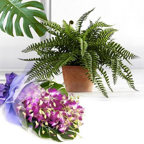Classic Gift of Indoor Bostern Fern Plant N Orchid Bouquet