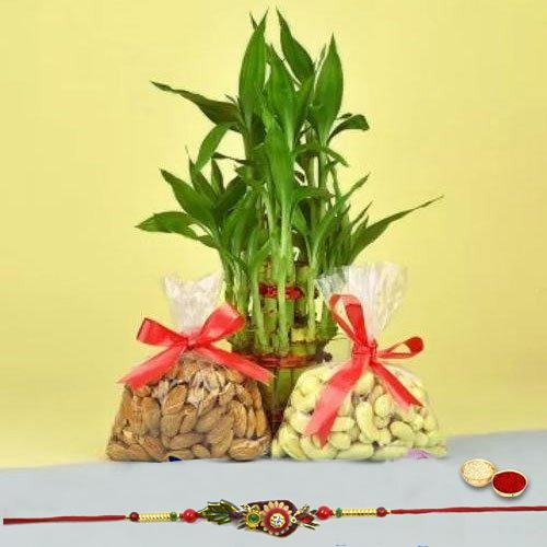 Attractive Bhai Rakhi with Dry Fruits n Bamboo Plant